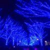 【青の洞窟/SHIBUYA】渋谷の冬の風物詩が今年も渋谷にやってきた!ブルー一色の光景はクリスマスデートに最適
